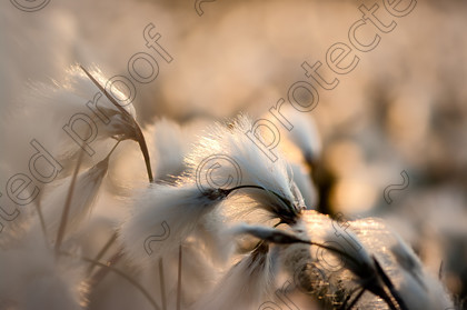 -5058-Edit-a 