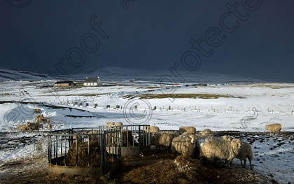 IMGP4310 a 