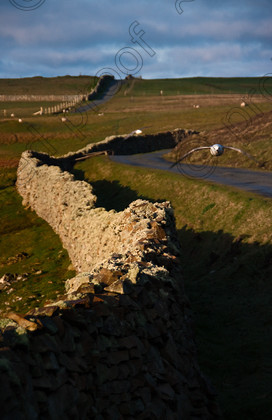 -4592-Edit-a 