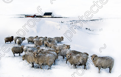 IMGP4220 a card 